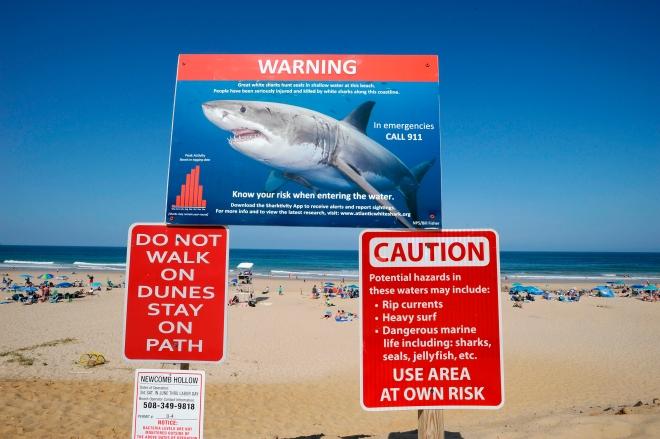 Image: US-SHARK-ENVIRONMENT-LIFESTYLE